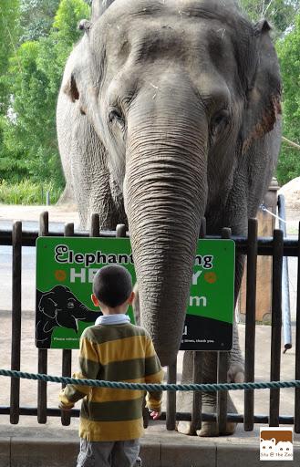 Australia Zoo review