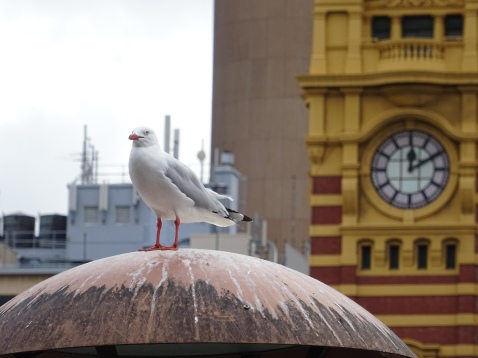 Melbourne2014 731