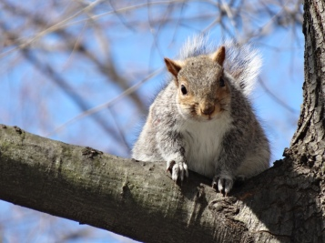 squirell 1
