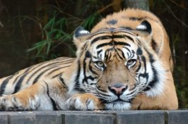 cropped-australia-zoo-june-2013-07311.jpg