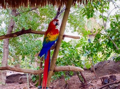 phoenix zoo 8